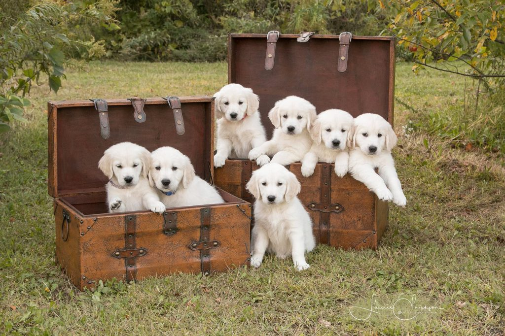 Pups in Chests