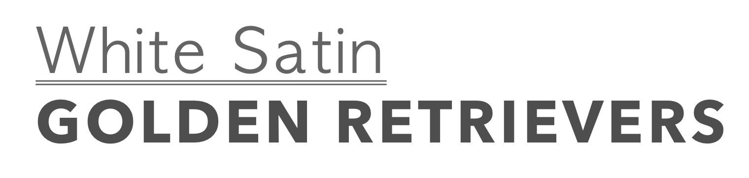 White Satin Golden Retrievers